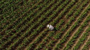 Granjas sanas, vidas sanas con fertilizante orgánico