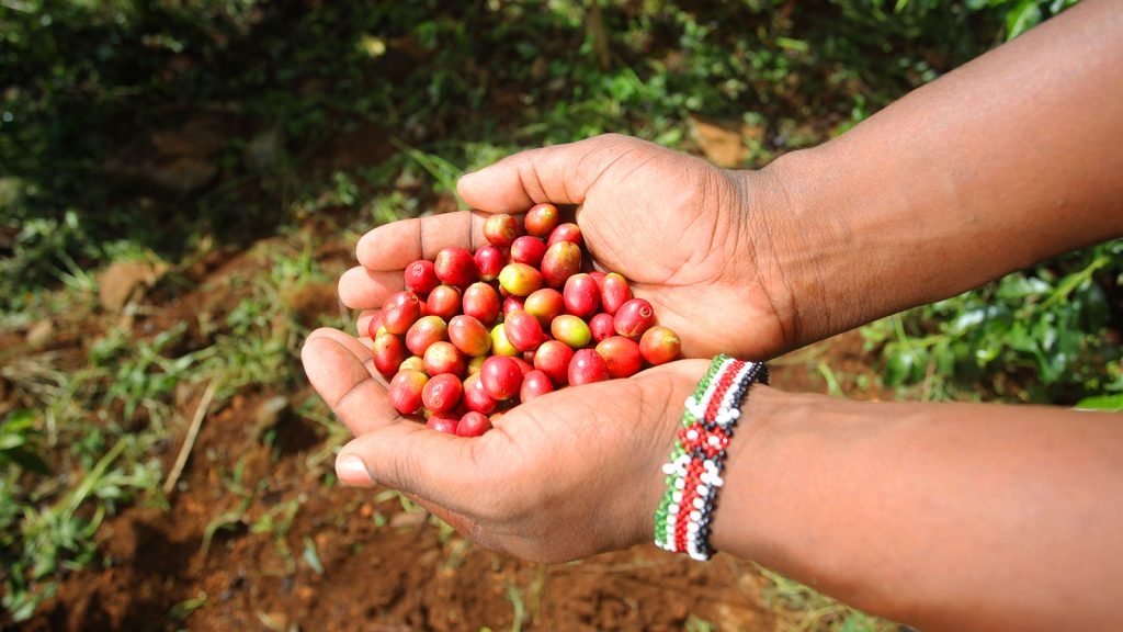Biofertilizer Series: Better Coffee for All!
