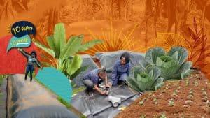 Veronica: Plantando árboles, cosechando el cambio