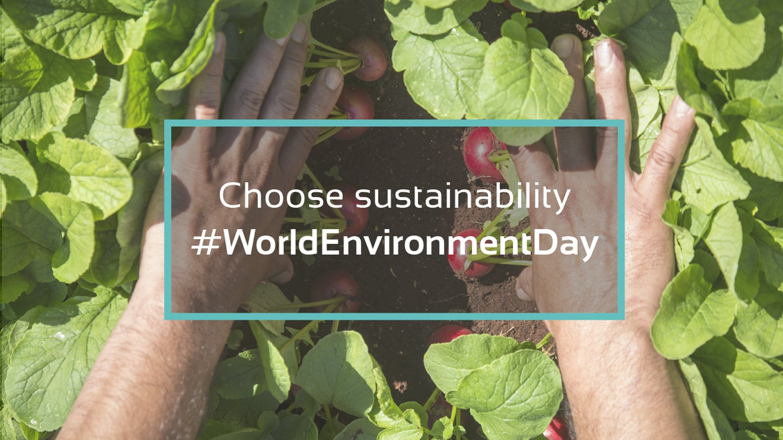 On World Environment Day, choose to eat sustainably
