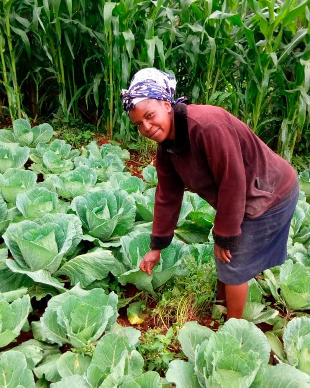 biofertilizer-cabbage-kenya-organic2