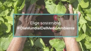 En el Día Mundial del Medio Ambiente, opta por comer sostenible
