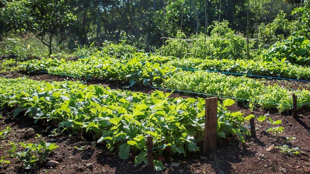 blog, sistemabio, granja
